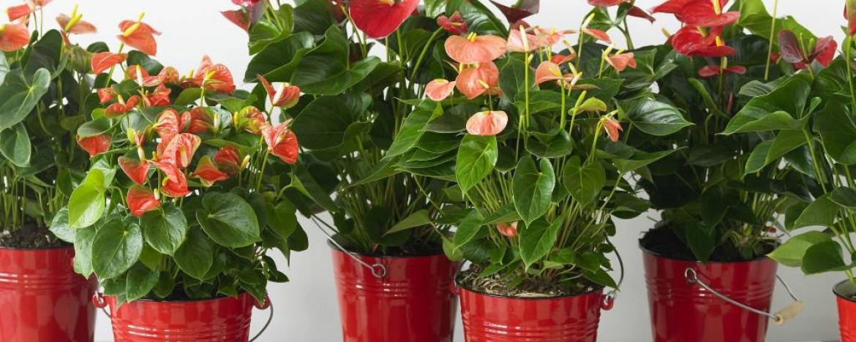 Top 23 Kamerplanten die je moet kennen #LG22