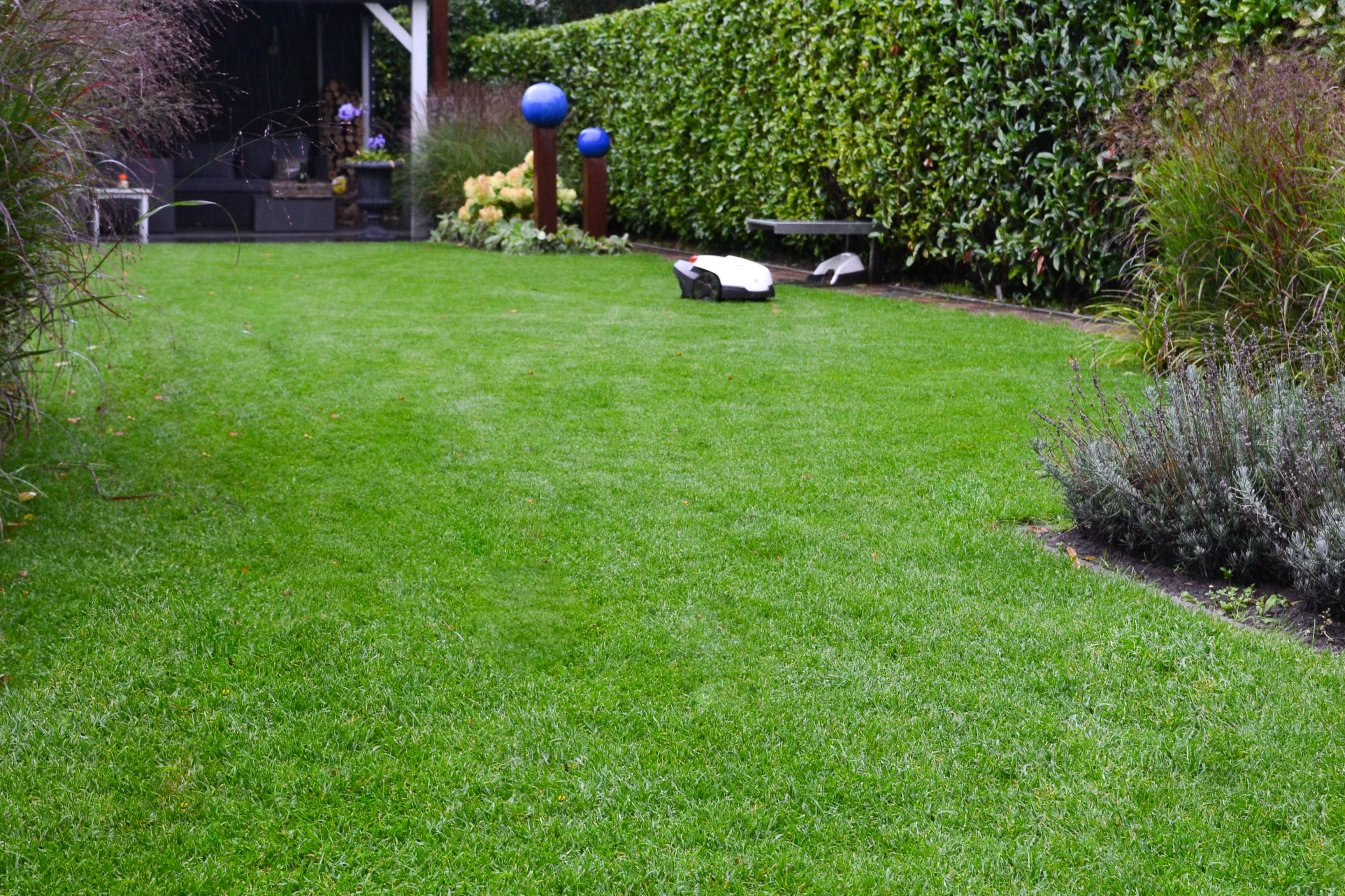 Gras In Tuin : Ode aan lang gras tuineninbeweging