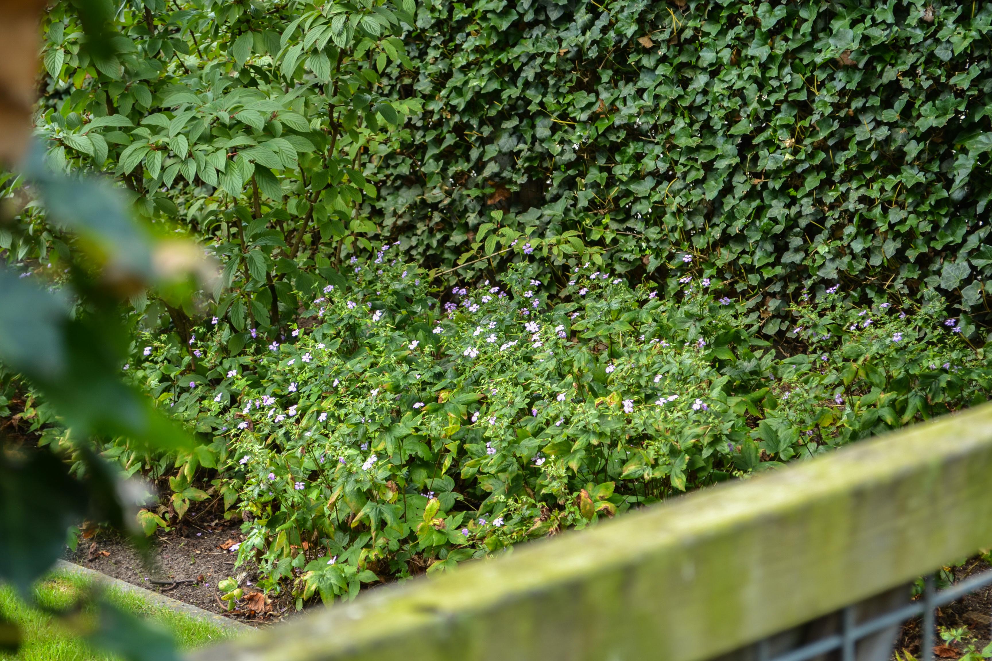 Mest Voor Tuin : Mest voor tuin. finest culterra kg with mest voor tuin. great tuin