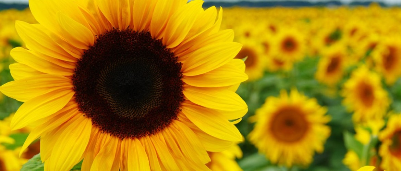 Tuintips augustus - praktische tips voor de tuin
