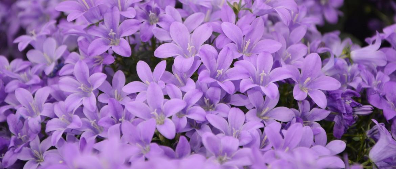 Tuintips mei - praktische tips voor de tuin