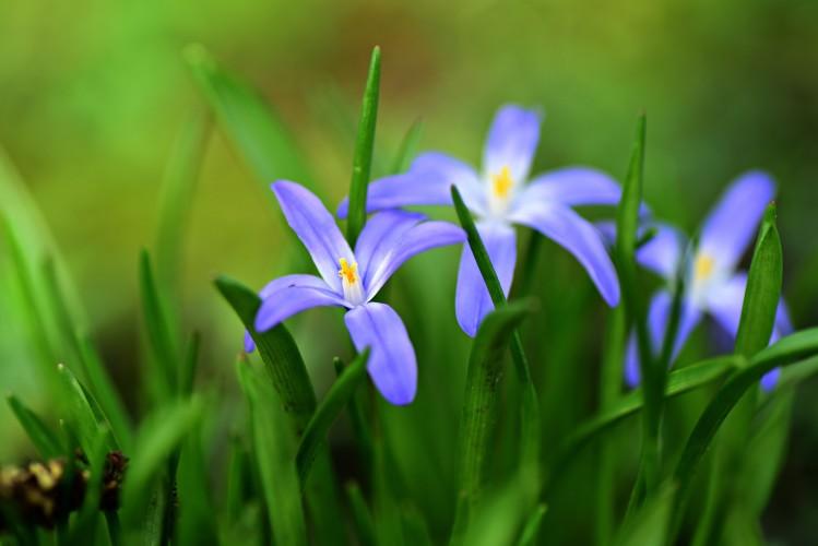 Tuintips april - praktische tips voor de tuin
