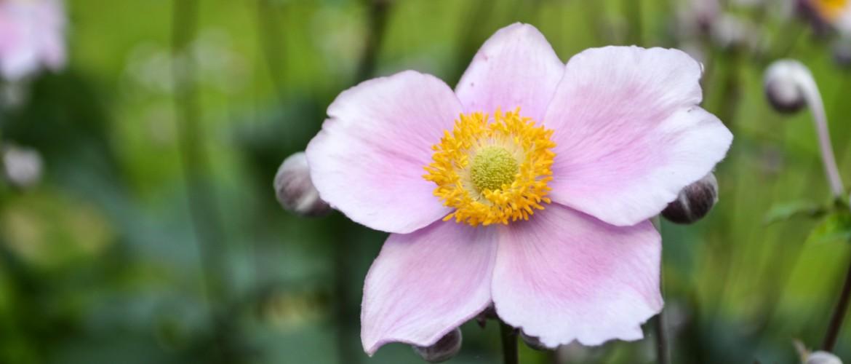 Tuintips juni - praktische tips voor de tuin