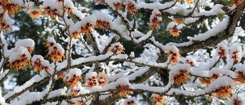 Tuintips december - praktische tips voor de tuin