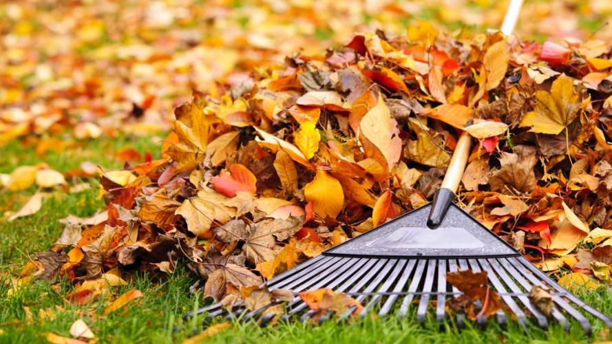 Tuintips oktober - praktische tips voor de tin