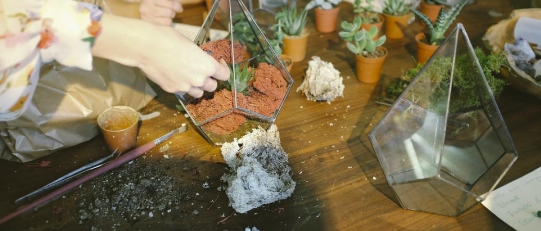 Wat zijn geschikte planten voor in een terrarium?
