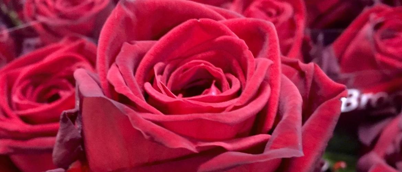 Bloemen laten bezorgen op Valentijnsdag