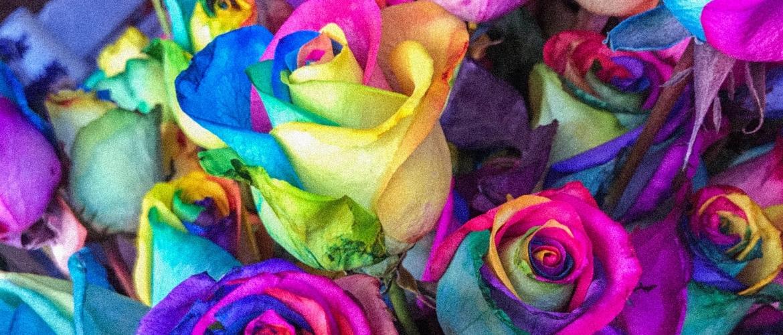 De kleur van de roos en haar betekenis