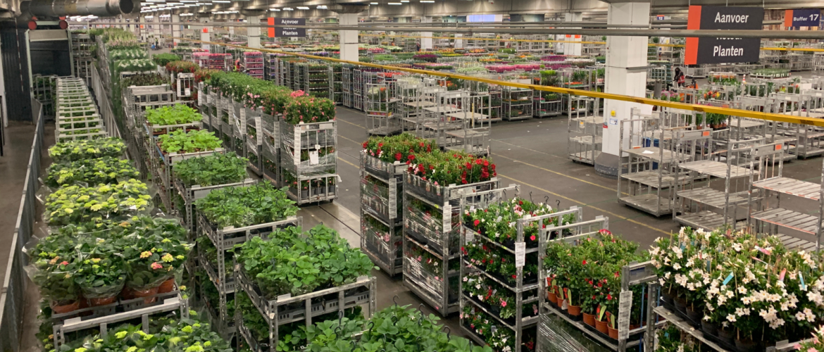Explore Dutch floriculture with the flower auction 'Behind the Scenes' walking tour.