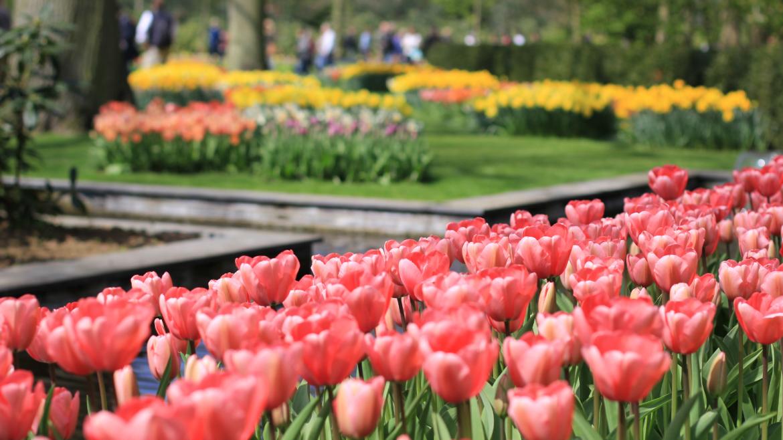 Flower-Tours-Holland-Keukenhof-tulips-daffodils-hyacinths