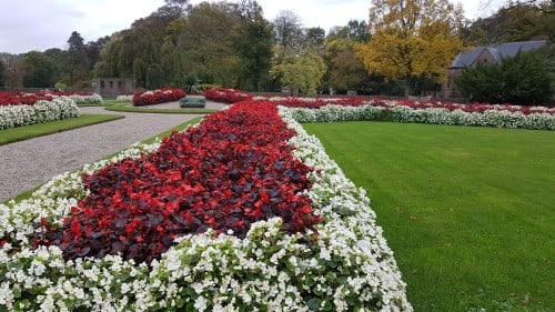 begonias-at-castle-gardens
