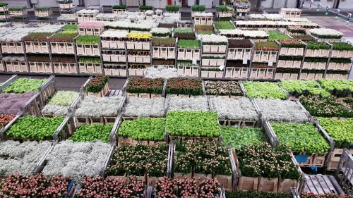 Carts-with-auctioned-flowers