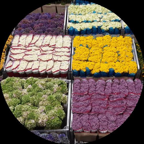 cut-flower-carts-at-flower-auction