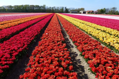 flower-field-with-various-colors