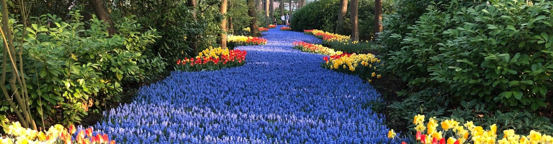 Private, guided and VIP Tours to flower destinations in Amsterdam, Holland.