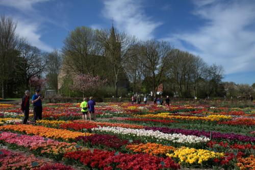 Hortus Bulborum Botanical garden, Tulip fields and Keukenhof Tour