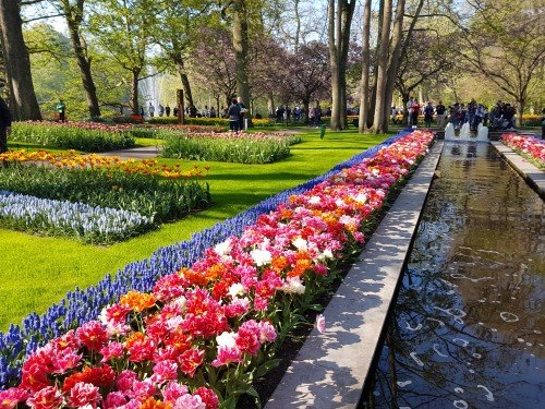 keukenhof-in-april