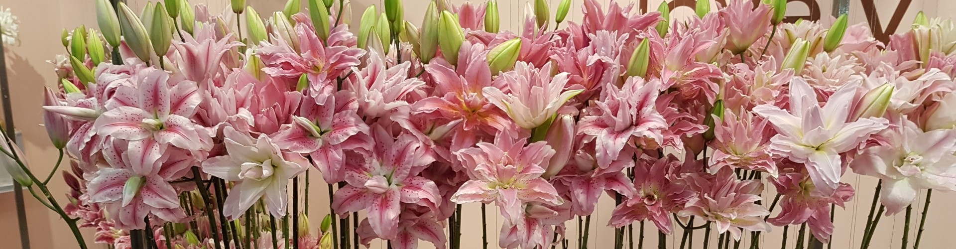 Double flowering Lilies