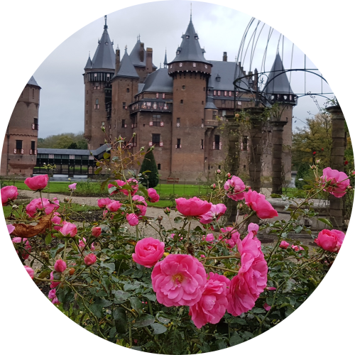 roses-at-castle-de-haar