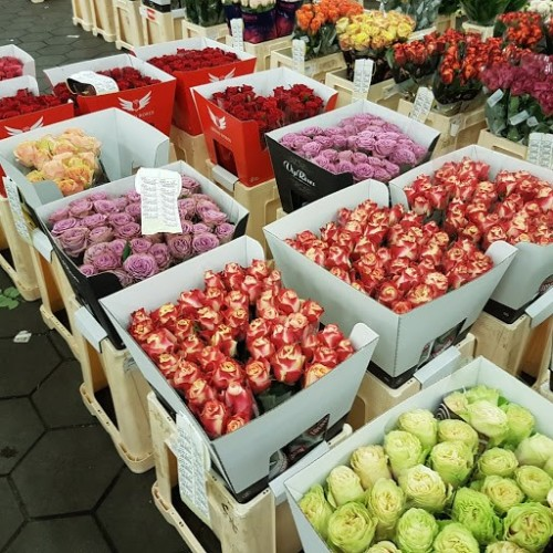 Roses-at-wholesale-center