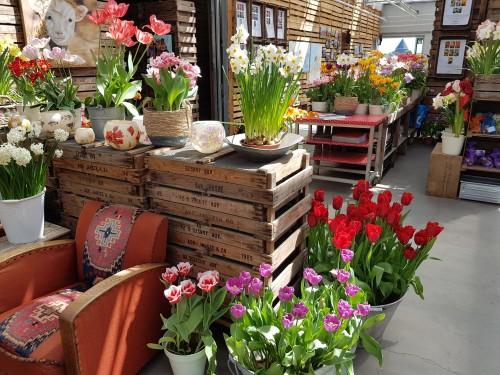 show-greenhouse-at-tulip-farm