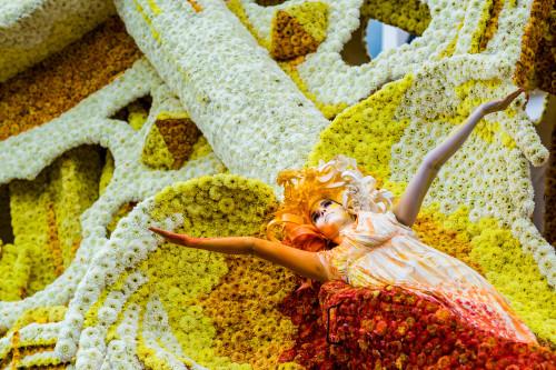 Dahlia parades and  Dahlia grower Tours