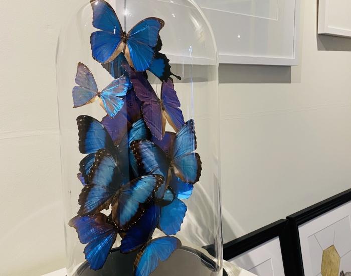 tropische vlinder stolpen