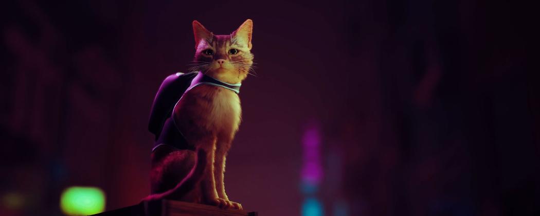 stray voor de echte katten liefhebbers