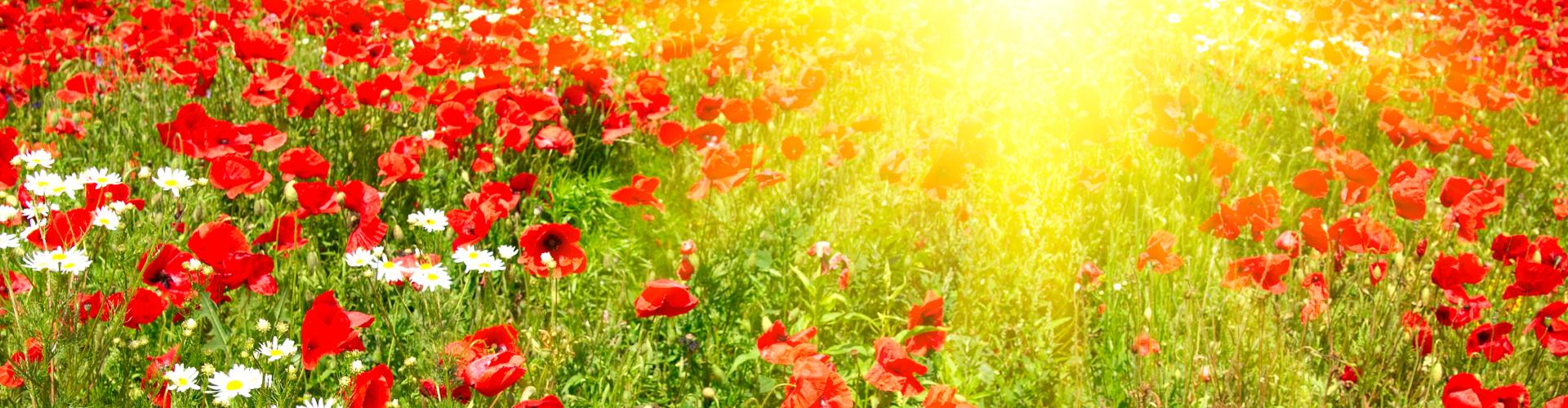 Zonlicht in onze voeding versterkt ons innerlijk licht en gids