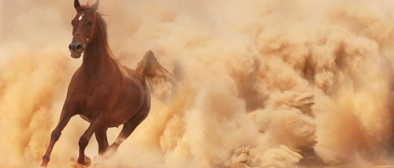 Natuurfilms: een positief effect op je immuunsysteem