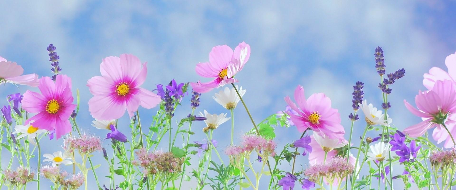 Het geheime leven van planten- De magie van genezing