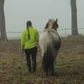 Recensie-Gooische-Paarden