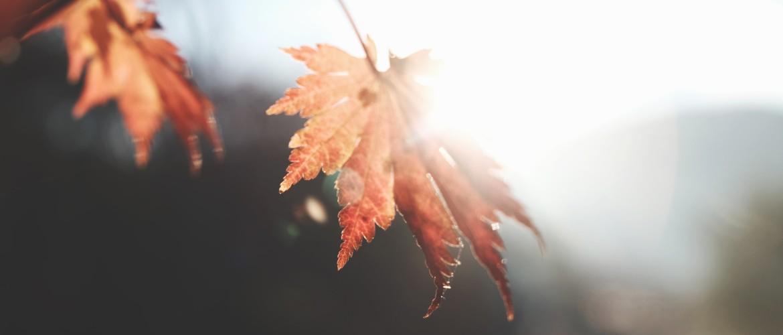 Liefdevolle Herfst