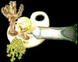 groendak aanleggen sedum 6