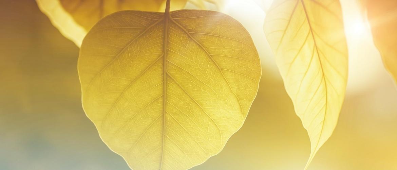 Meditatie voor beginners: 3 simpele oefeningen van Chade-Meng Tan