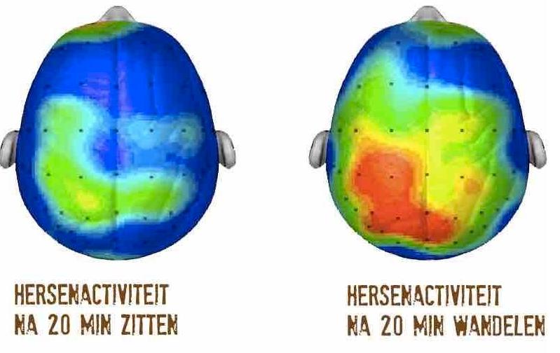 workaholic-hersenactiviteit-bij-beweging-en-stil-zitten