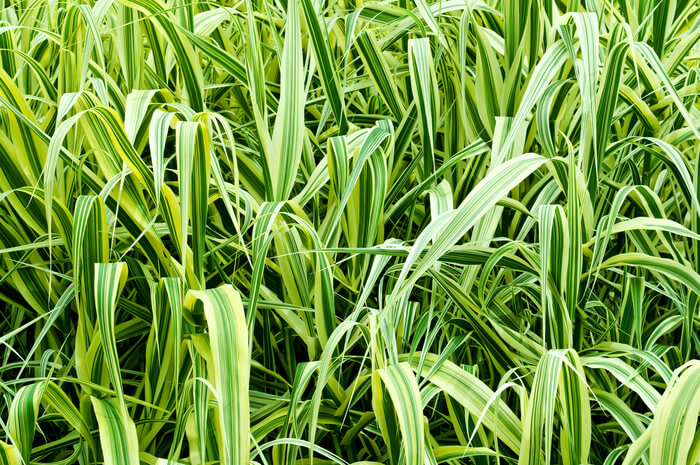 planten die goed presteren in de schaduw