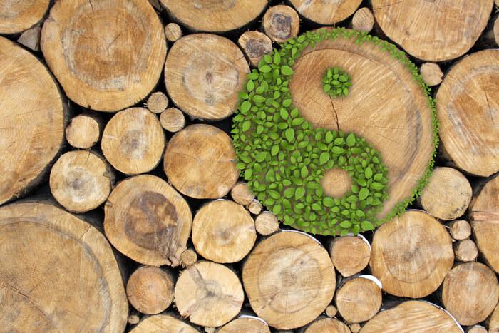 Hoe duurzaam is hout eigenlijk