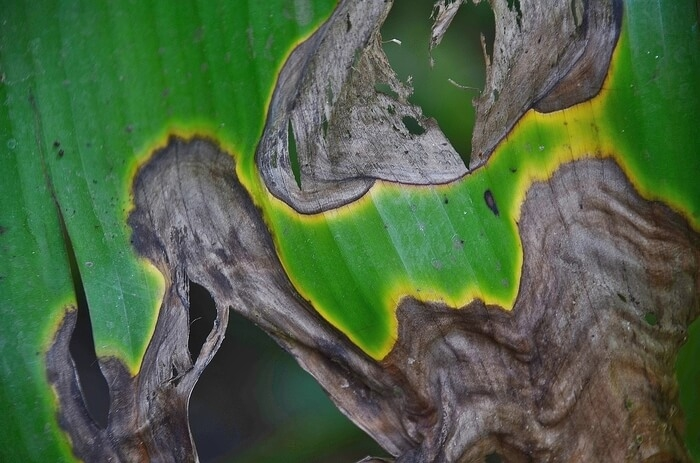 virussen bij planten