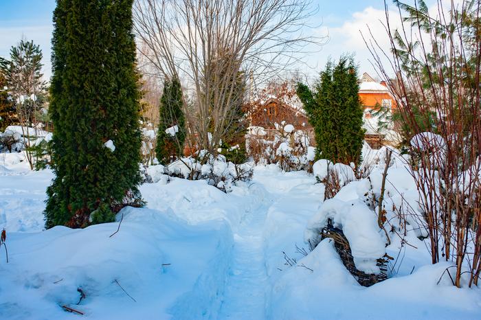 planten de winter door