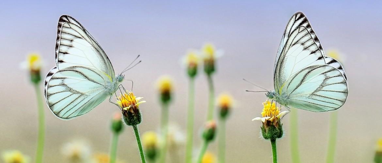 Meditatie nu: Leven vanuit jouw duurzame en natuurlijke flow...