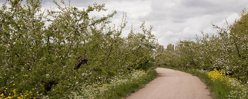 Fietsvakanties in Nederland, ook culinaire fietstochten