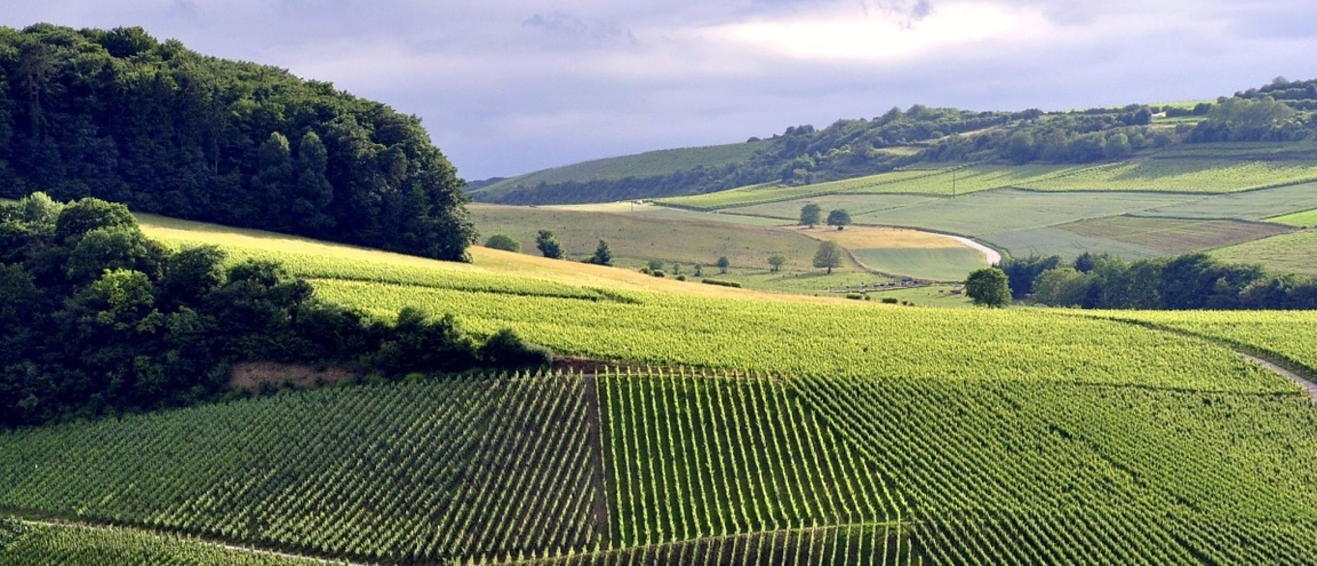 Moezelvallei met de wijnroute en wijn- en crémantkelders