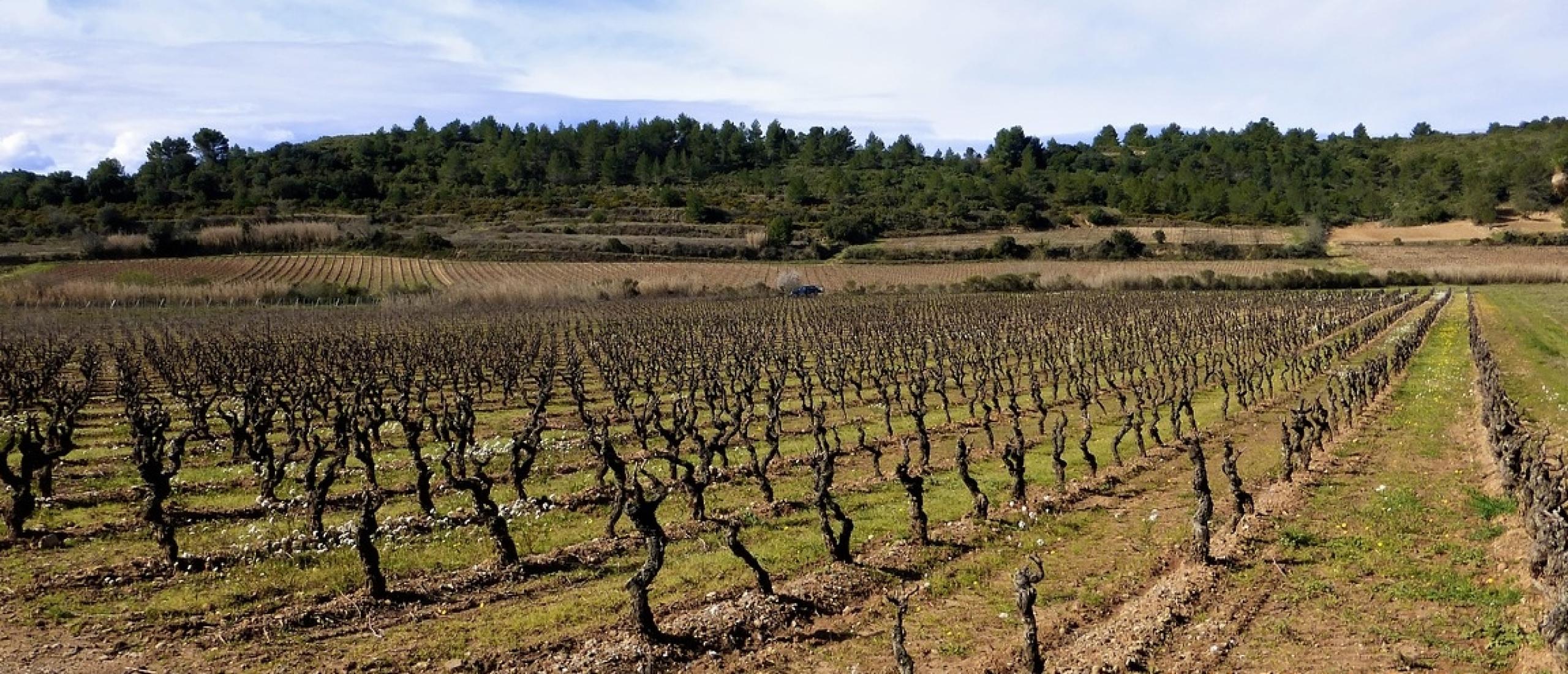 Troyes en Langres in het zuiden van de Champagne