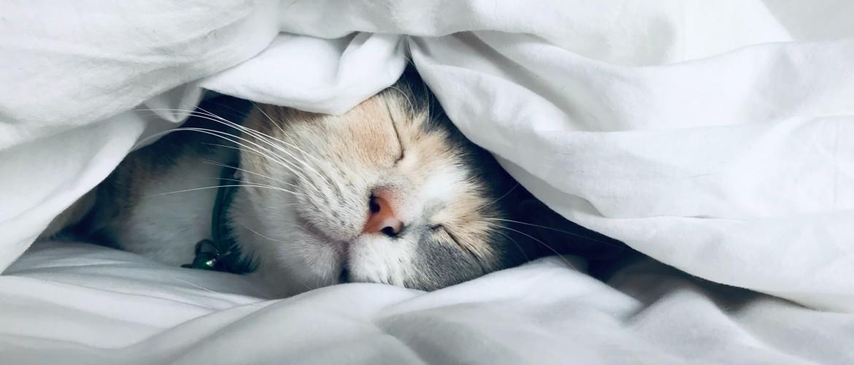 Het belang van een vitale nachtrust | Vijf inzichten