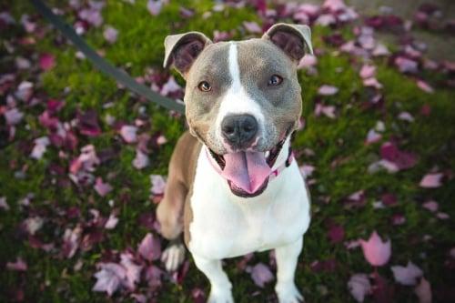Hondenschool ABCT alle rassen welkom
