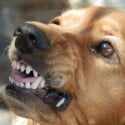 Hondenschool ABCT Gedragstherapie