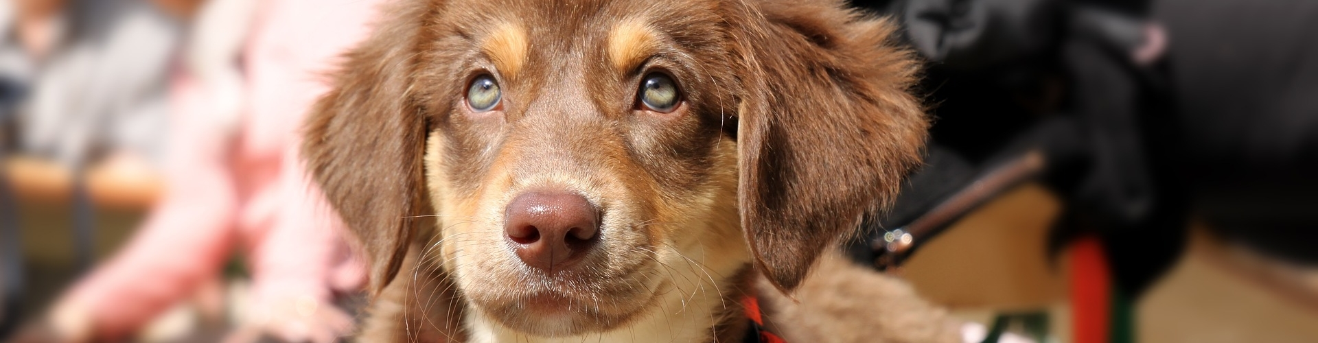 Diervriendelijke training hondenschool ABCT