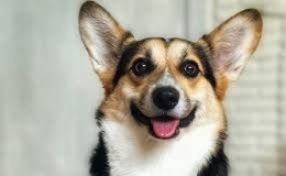 Gehoorzame blije honden Hondenschool ABCT