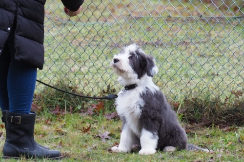 Puppycursus James op Hondenschool ABCT